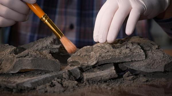 В Великом Новгороде нашли редкую средневековую печать