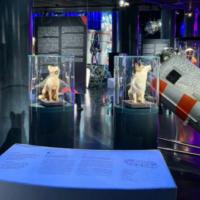 Московские музеи подготовили онлайн-выставки ко Дню космонавтики