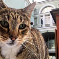 Эрмитаж показывает музейных котов онлайн