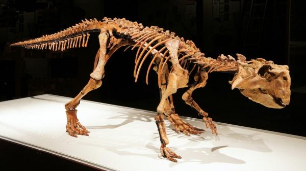 «Эволюция органического мира»: российский палеонтолог — о страусах-гигантах, динозаврах и пещерных гиенах в Крыму