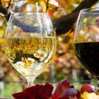 Что нужно знать огрузинском вине: краткое введение втему