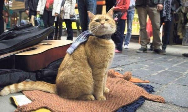 Музыкант Джеймс Боуэн сообщил осмерти знаменитого кота Боба