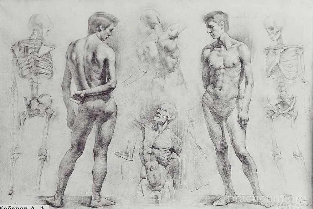 Обучение рисованию в Белгороде. Курс Основы академического рисунка